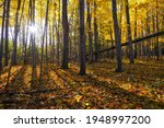 Lens Flare In The Forest With...
