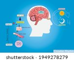 the circadian rhythms are... | Shutterstock .eps vector #1949278279