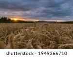 Beautiful Sunset At The Wheat...