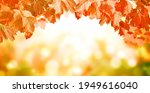 Calm Fall Season. Viburnum...