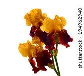 Iris Flowers Isolated....