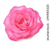 Beautiful Pink Rose Flower Wit...