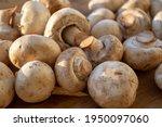 Fresh Healthy Brown Mushrooms...