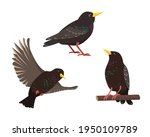 set of starling birds in...   Shutterstock .eps vector #1950109789