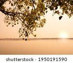 Bodhi Leaf Tree Scenery On...