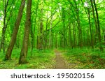 path in spring green forest | Shutterstock . vector #195020156