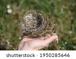 Small photo of a bird nest for breeding and raising progeny or offspring