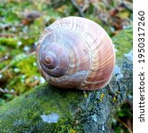 An Old Snail Shell Posing On A...