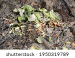 Heap Of Compost With Vegetables ...