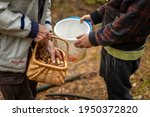 Men Collecting Mushrooms In The ...