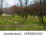 nikolaev  ukraine   06 april... | Shutterstock . vector #1950501910