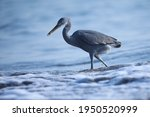 India  9 December  2020   Heron ...
