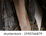 old wood plank background ...   Shutterstock . vector #1950766879
