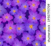 crocus spring flowers seamless...   Shutterstock .eps vector #1950795709