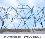 Barbed Wire On The Concrete...