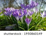 spring background with... | Shutterstock . vector #1950860149