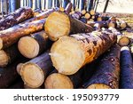 cut trees in the forest | Shutterstock . vector #195093779