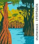 bald cypress growing in the...   Shutterstock .eps vector #1950956656