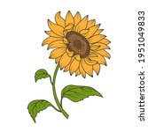 Sunflower. Flower With Stem And ...