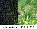 Big Snail Crawls Over Tree