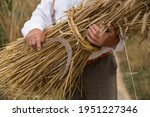 Small photo of a sheaf of wheat ears in the hands of an elderly man. Sheaf of wheat harvested with a sickle
