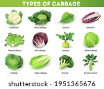 set with different types of... | Shutterstock .eps vector #1951365676