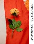 A Single Rose On A Orange Table ...
