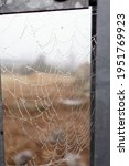 Spider Web Attached To Metal...