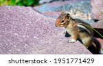 Little Squirrel On A Rock In...