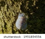 Big Snail Crawls Over Tree ...