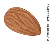 almond isolated. almonds on... | Shutterstock . vector #1951883989