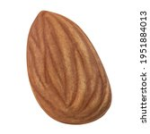 almond isolated. almonds on... | Shutterstock . vector #1951884013