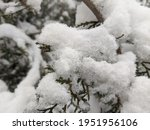 winter in the park landscape... | Shutterstock . vector #1951956106