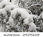winter in the park landscape... | Shutterstock . vector #1951956109