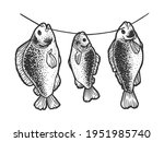crucian carp fish dries on a... | Shutterstock .eps vector #1951985740