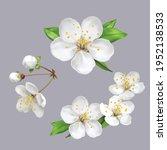 Spring Flowers  Blossom  White...