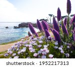 Purple And White Flowers By The ...