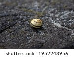 A Small Mollusk Shell Lying On...