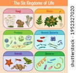 science poster of six kingdoms... | Shutterstock .eps vector #1952327020
