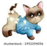 Cute Pet Kitten In Sweater With ...