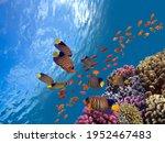 Underwater Scene. Coral Reef ...