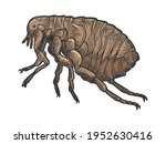 flea louse insect color sketch... | Shutterstock . vector #1952630416