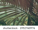 Palm Leaf In Tropical Forest...