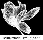 abstract flowers macro... | Shutterstock . vector #1952776570