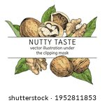 vector frame with walnuts ... | Shutterstock .eps vector #1952811853