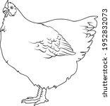 chicken line vector... | Shutterstock .eps vector #1952832073
