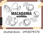macadamia and crack pieces ... | Shutterstock .eps vector #1953079270