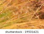 Swamp Grass Background