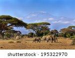 Elephants In Front Of Mt....