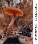 Orange Mushroom In The Autumn...